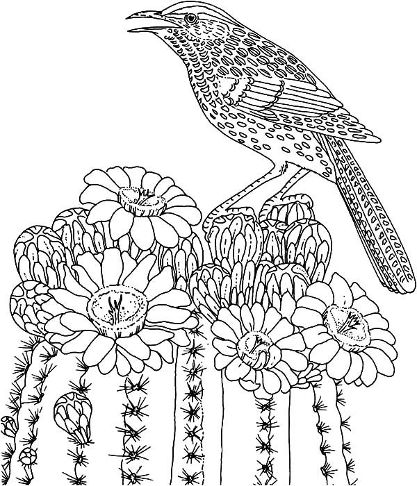 Bird singing on cactus tree coloring pages