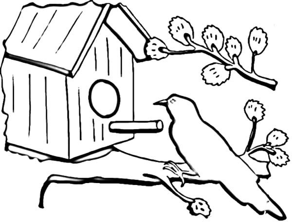 Bird House, : Bird Sitting in Front of Bird House Coloring Pages