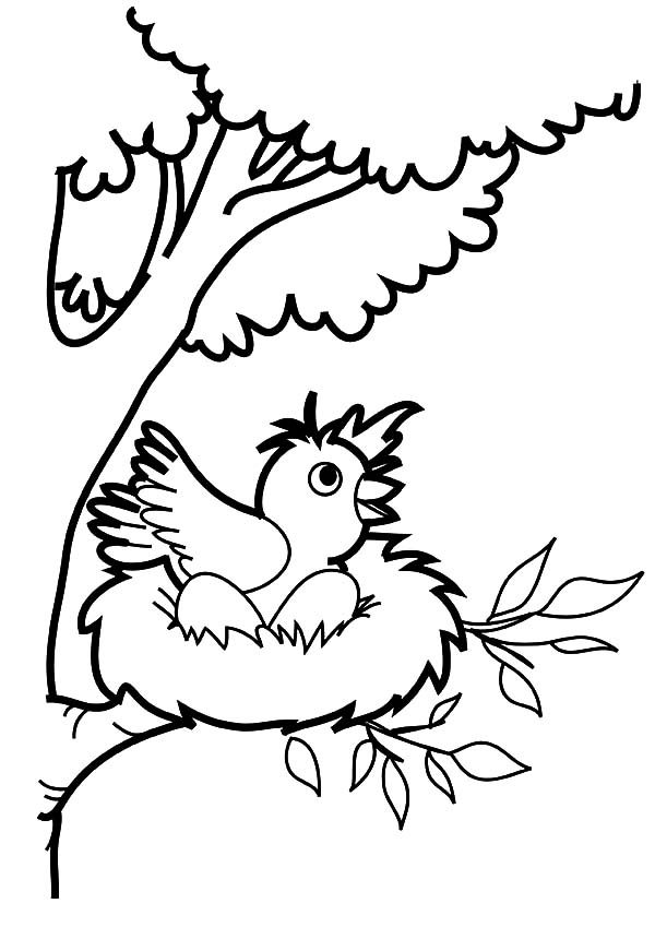 Bird Nest, : Bird Want to Jump from Bird Nest Coloring Pages