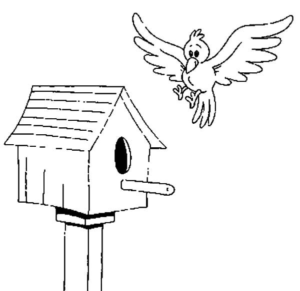 Bird House, : Bird about to Land on Bird House Coloring Pages
