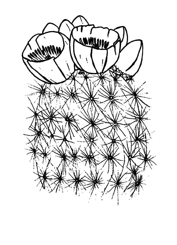 Cactus, : Blooming Cactus Flower Coloring Pages