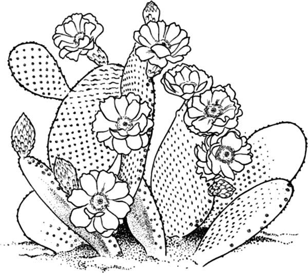 cactus coloring pages plants - photo#23