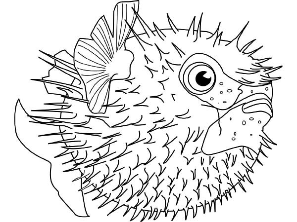 Blowfish, : Blowfish Defending Himself with Spine Coloring Pages