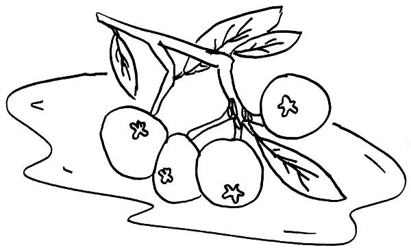 Blueberry Bush, : Blueberry Bush Falling Down Coloring Pages