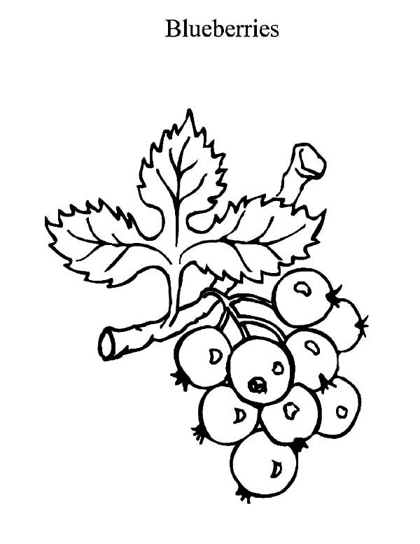 Blueberry Bush, : Blueberry Bush in the Garden Coloring Pages