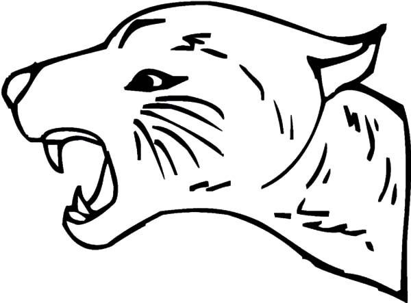 Bobcat, : Bobcat Roaring Coloring Pages