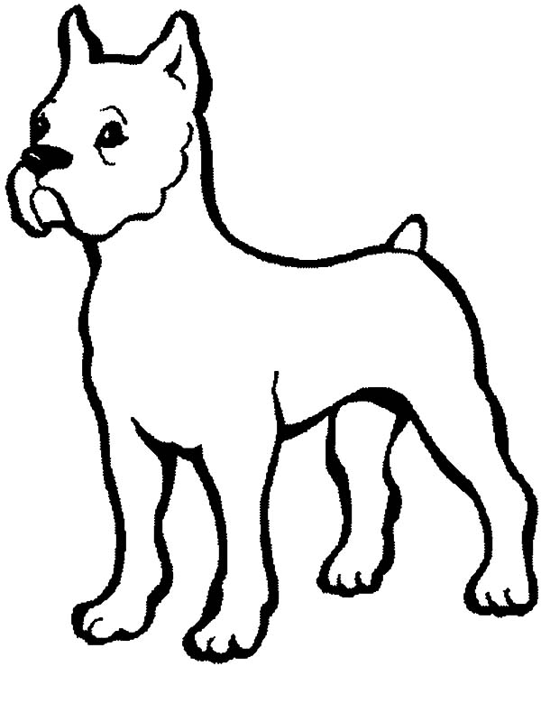 Boxer dog baby coloring pages boxer dog baby coloring for Printable boxer dog coloring pages