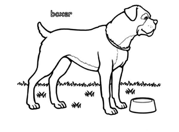 Boxer Dog, : Boxer Dog Bowl is Empty Coloring Pages