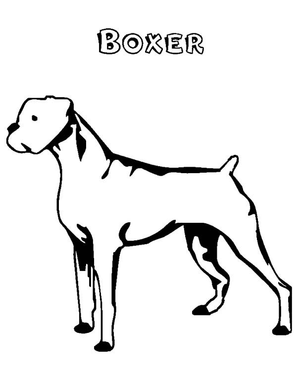 Boxer Dog, : Boxer Dog Coloring Pages