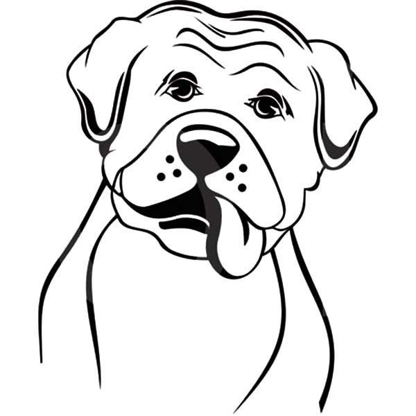 Boxer Dog, : Boxer Dog Coloring Pages for Kids