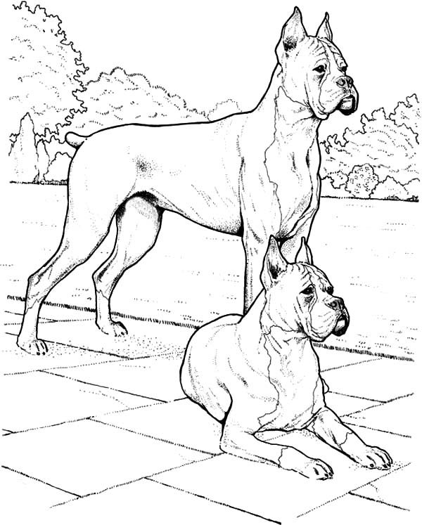 Boxer Dog, : Boxer Dog Couples Coloring Pages