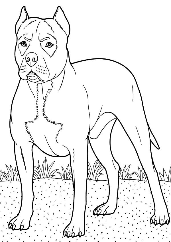 Boxer Dog, : Boxer Dog Guarding at Backyard Coloring Pages