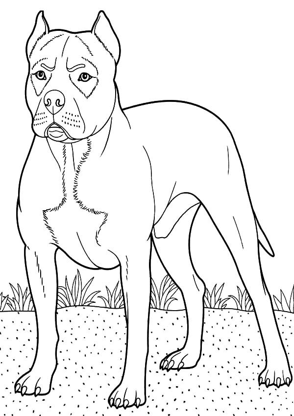 Boxer dog guarding at backyard coloring pages boxer dog for Printable boxer dog coloring pages