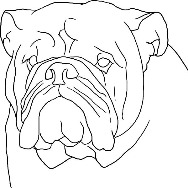 Boxer Dog, : Boxer Dog Head Outline Coloring Pages