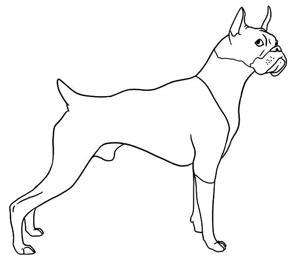 Boxer Dog, : Boxer Dog Hearing Sound Coloring Pages