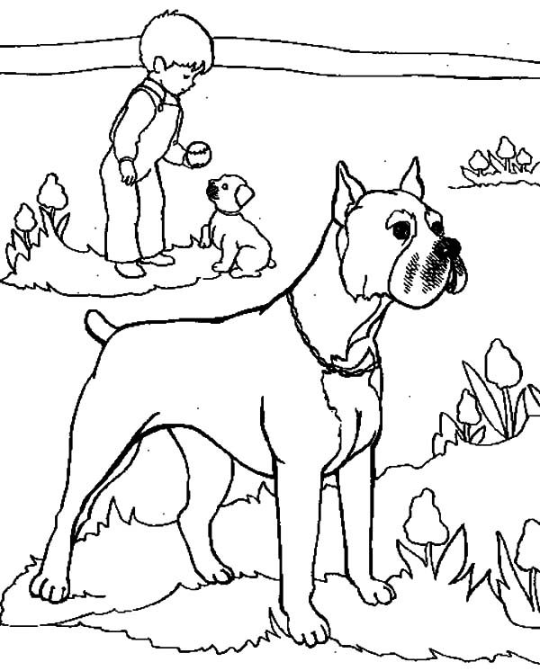 Boxer Dog, : Boxer Dog Keeper His Master Safe Coloring Pages