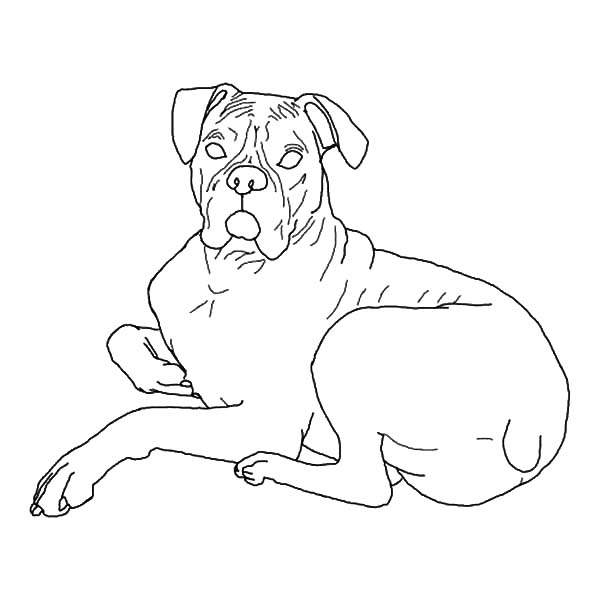 printable boxer dog coloring pages boxer dog coloring pages