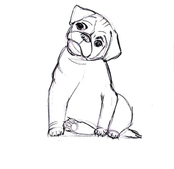 Boxer Dog, : Boxer Dog Move His Head Coloring Pages