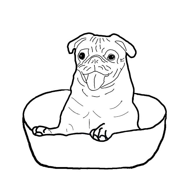 Boxer Dog, : Boxer Dog Sitting in a Bowl Coloring Pages