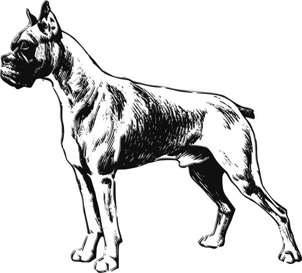 Boxer Dog, : Boxer Dog Sketch Coloring Pages