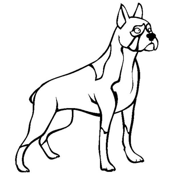 Boxer Dog, : Boxer Dog Standing Tall Coloring Pages