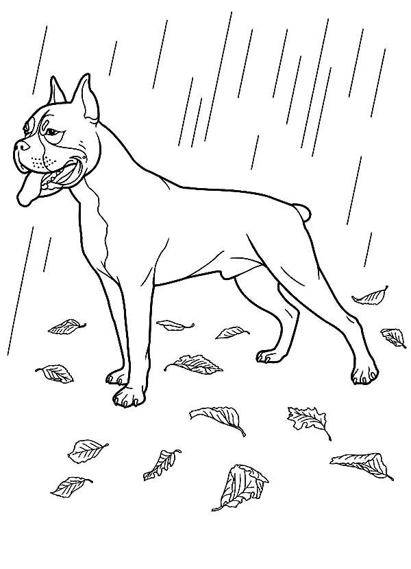 baby boxers coloring pages - photo #30