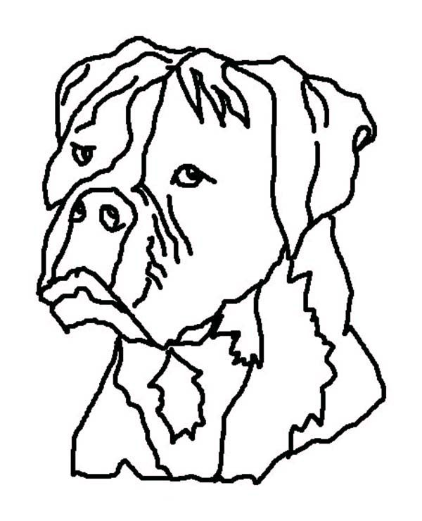 Boxer Dog, : Boxer Dog Ugly Face Coloring Pages