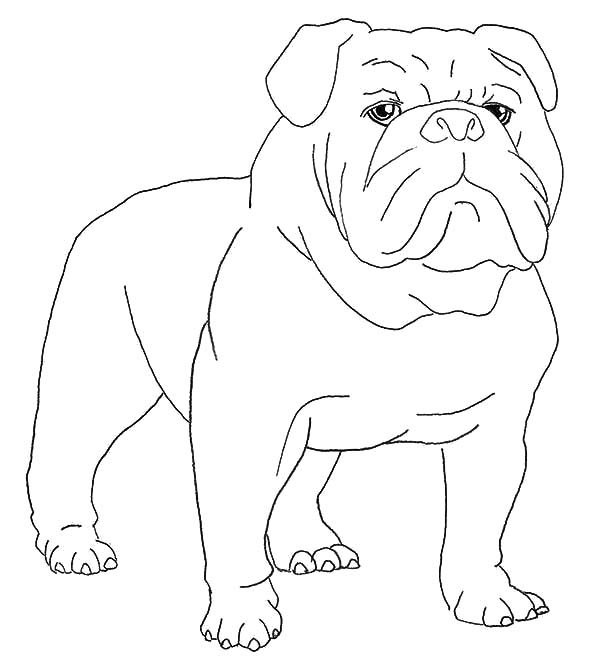 Boxer Dog, : Boxer Dog Waiting for His Master Coloring Pages