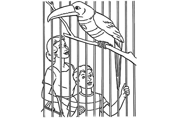 Bird Cage, : Boy Visit Toucan in Bird Cage Coloring Pages