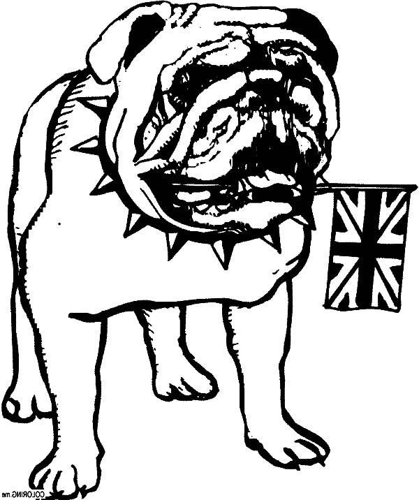 Bulldog, : British Bulldog Coloring Pages