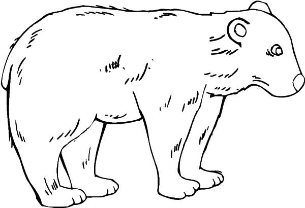 Brown Bear, : Brown Bear Coloring Pages for Kids