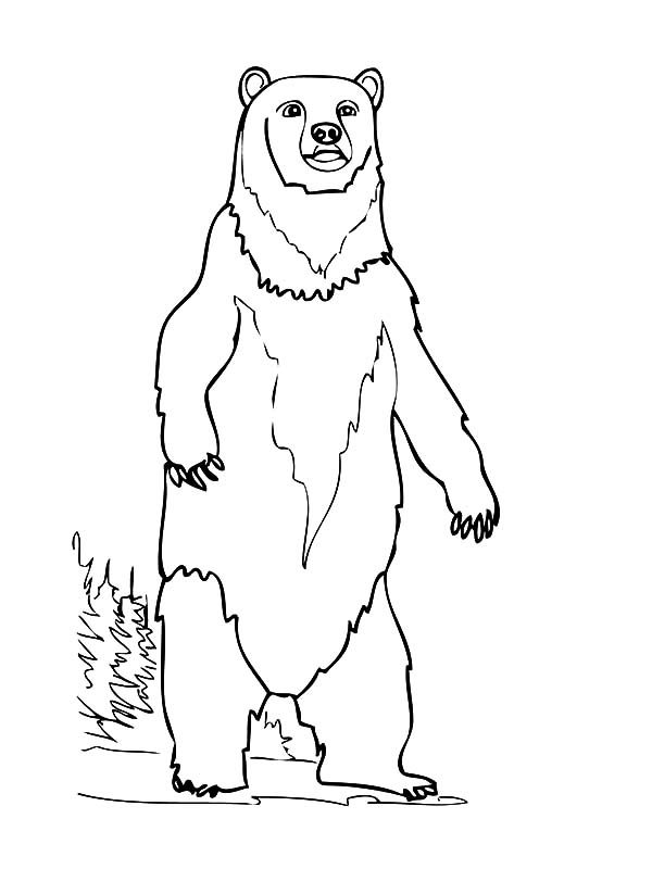 Brown Bear, : Brown Bear Guarding His Teritory Coloring Pages