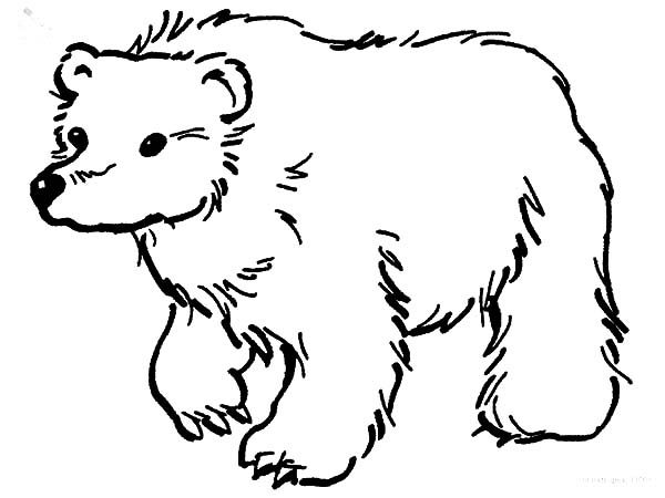 Brown Bear Looking for Food Coloring Pages | Best Place to Color
