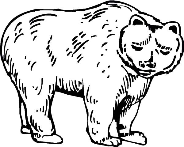 Brown Bear, : Brown Bear Mother Coloring Pages