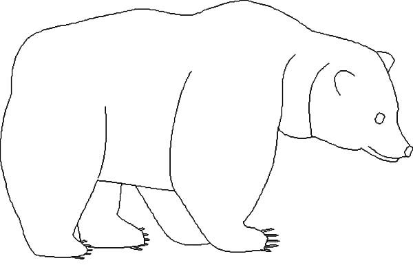 Brown Bear, : Brown Bear Outline Coloring Pages