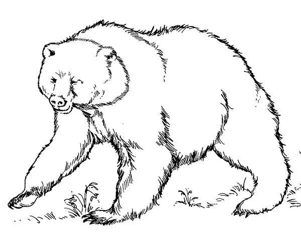 Brown Bear, : Brown Bear Ready to Fight Coloring Pages