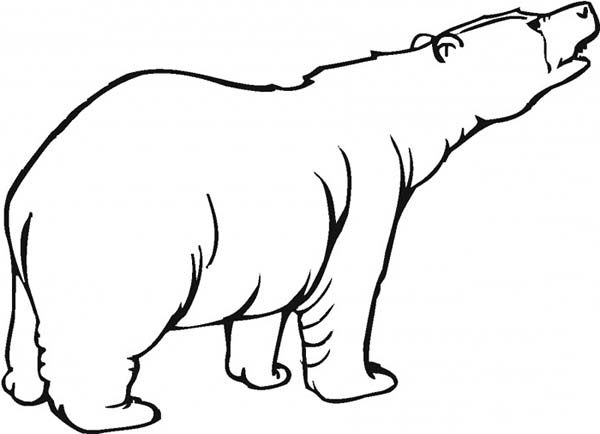 Brown bear roaring coloring pages best place to color for Brown bear coloring pages
