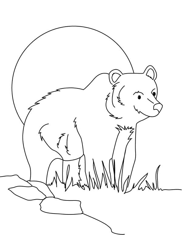 Brown Bear, : Brown Bear Sneaking Behind Grass Coloring Pages