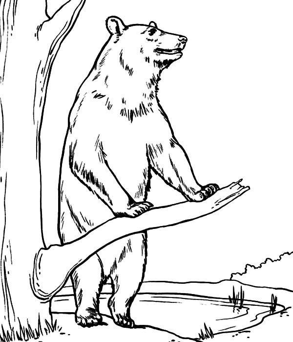 Brown Bear, : Brown Bear Standing Beside a Tree Coloring Pages