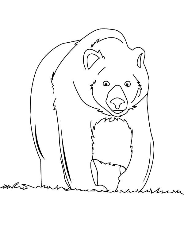 Brown Bear, : Brown Bear Walking Around Coloring Pages