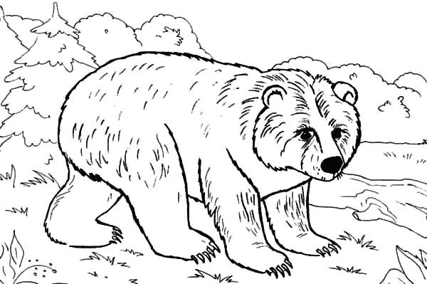 Brown bear in the jungle coloring pages