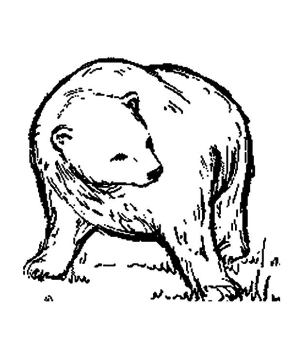 Brown Bear, : Brown Bear is Cautious Coloring Pages