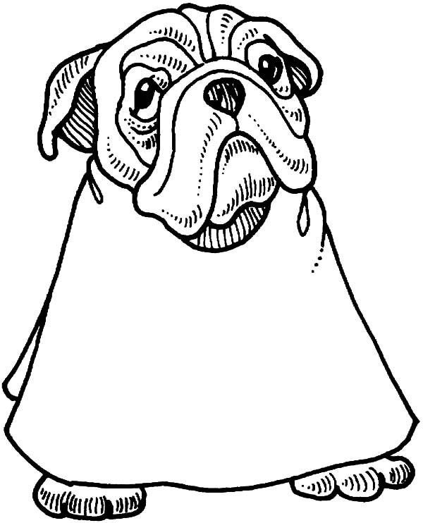 Bulldog, : Bulldog Going to Barbershop Coloring Pages