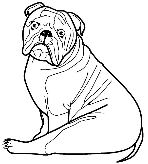 Bulldog, : Bulldog is Surprised Coloring Pages
