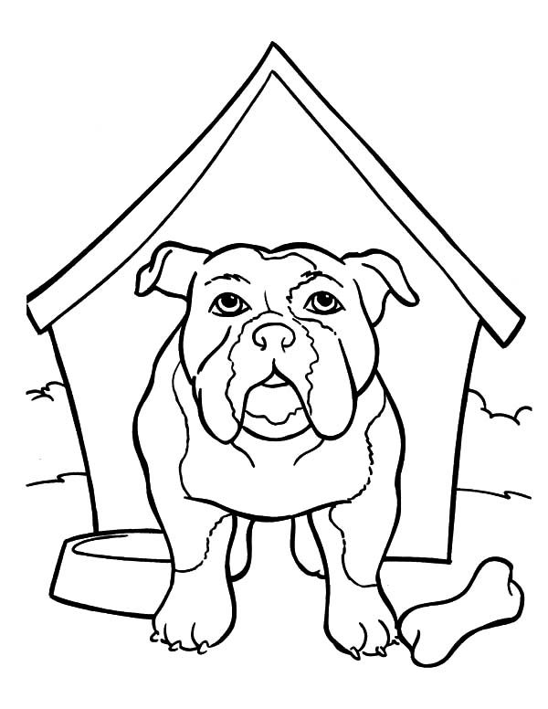 Bulldog, : Bulldog is in the Kennel Coloring Pages