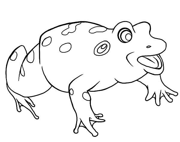Bullfrog, : Bullfrog Calling for His Mate Coloring Pages