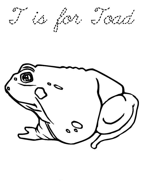 Bullfrog, : Bullfrog Toad Coloring Pages