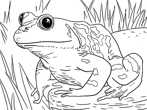 swamp monster coloring pages | Swamp Creature Coloring Pages Coloring Coloring Pages