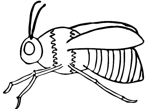 bumble bee anatomy coloring pages - Anatomy Coloring Pages