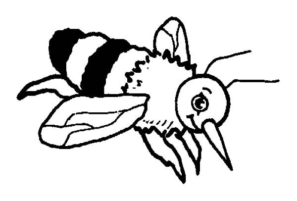 Bumble Bee, : Bumble Bee Sting Coloring Pages
